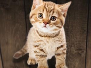 Zooveikals parūpēsies par īpašo ēdienkarti kaķēniem: kāpēc tas ir tik svarīgi