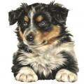 Puppy & Junior